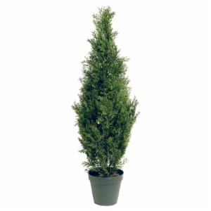 36-in. Arborvitae with Green Pot