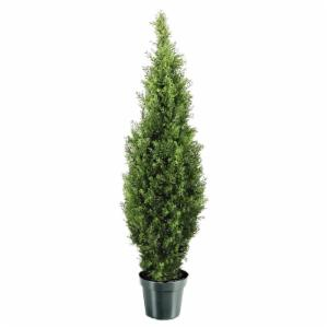 48-in. Arborvitae with Green Pot