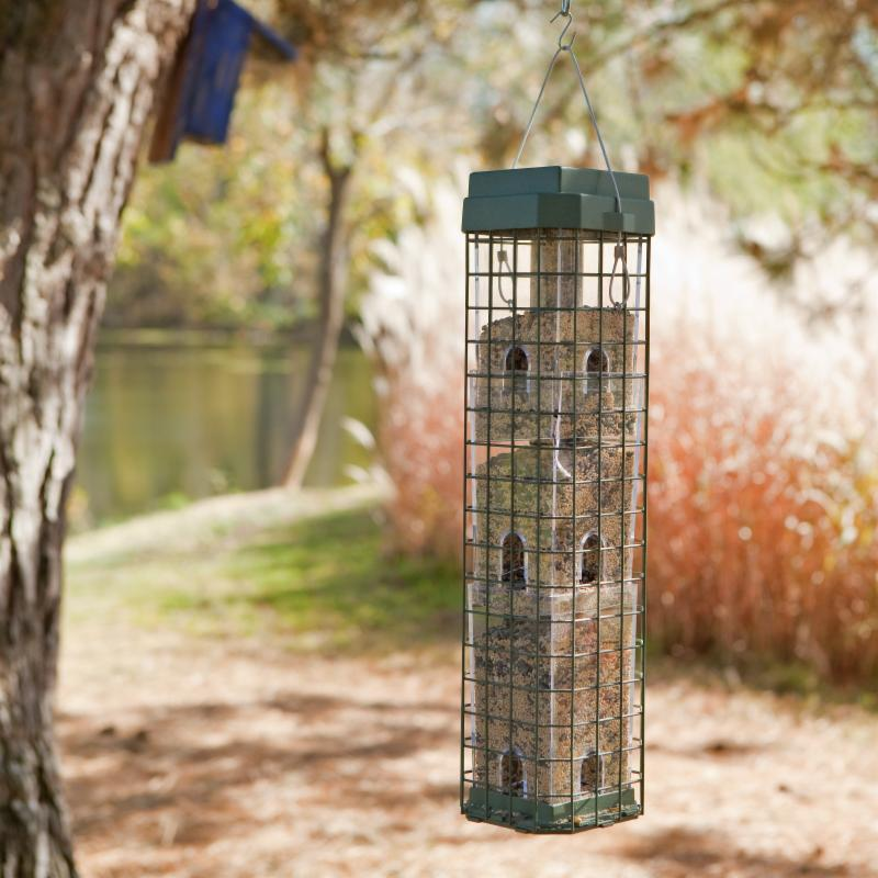 Evenseed Squirrel Proof Bird Feeder