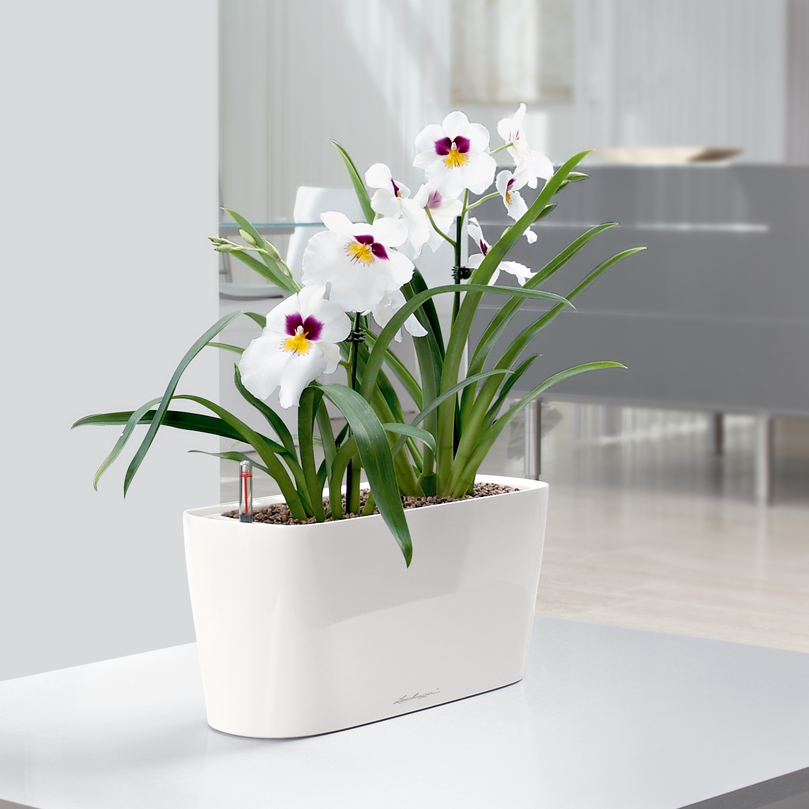 Lechuza Windowsill Self Watering Indoor Planter Planters At Hayneedle