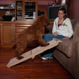 Pet Gear Indoor Bi-Fold Half Ramp with Carpet