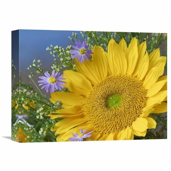 Global Gallery Common Sunflower and Asters North America Canvas Wall Art