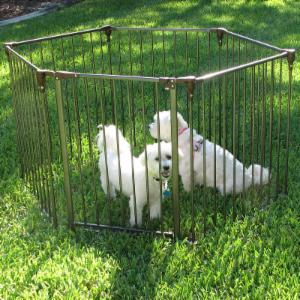 Crown Pet Convertible Pet Yard & Gate