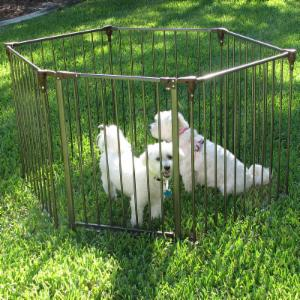 Crown Pet Convertible Pet Yard & Gate with Optional Extension