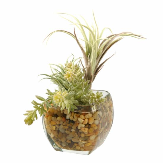 D&W Silks Tillandsia and Easter Grass in Glass Cube