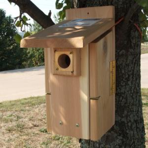 Ultimate Bluebird House