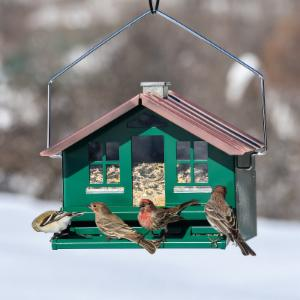 Perky Pet Squirrel Be Gone Home Style Bird Feeder
