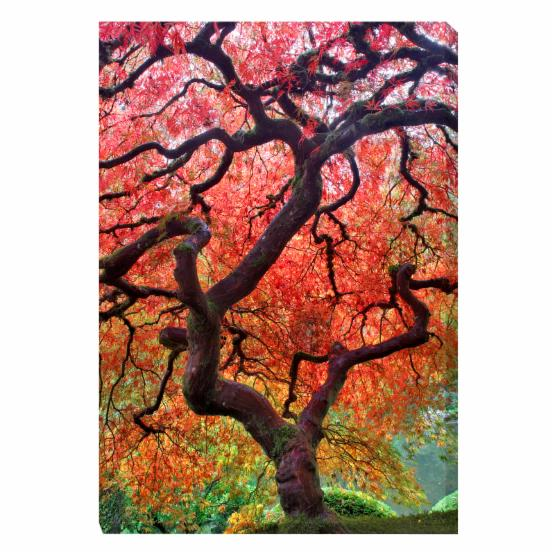 West of the Wind Japanese Maple Tree Outdoor Canvas Art