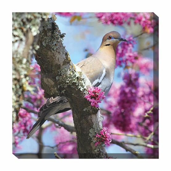 West of the Wind Dove in Redbud Outdoor Canvas Art - 24 x 24 in.